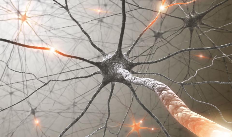 Virtual Brain: jens